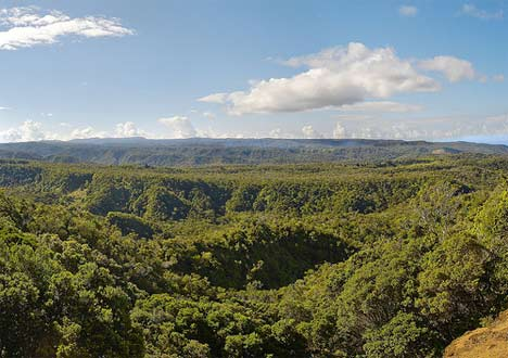 Pictures of Rainforest Canopy in Peru - World Travel Photos