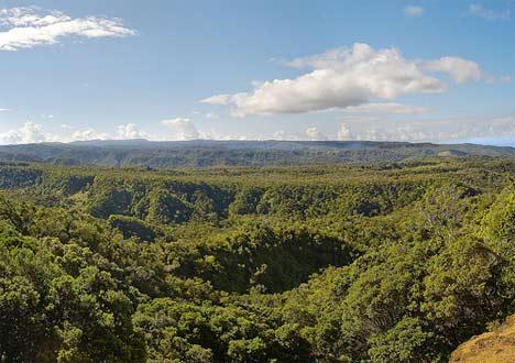 Mamu Rainforest Canopy Walkway - About Mamu (Department of